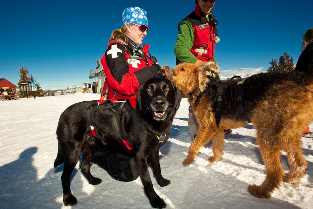 Aspen Avalanche Dogs