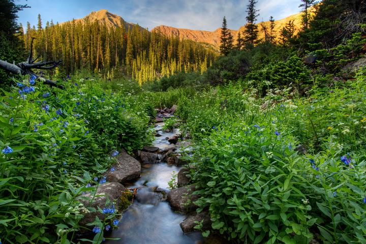 Aspen Wildflowers 2