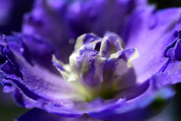 Aspen Wildflowers 9