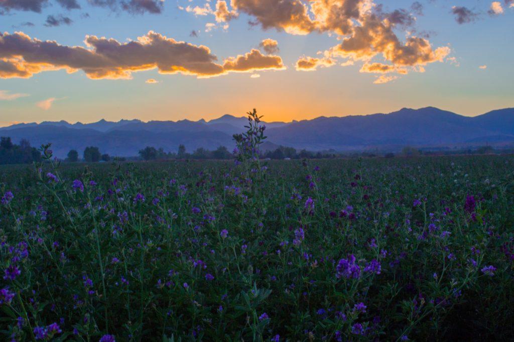 calming landscape
