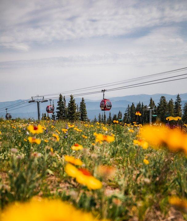 Wildflowers in Aspen